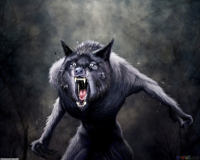 A werewolf, also known as a lycanthrope (from the Greek λυκάνθρωπος: λύκος, lykos,